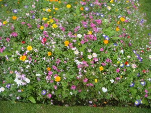 Close-up_of_wild_flowers_(7592663452)